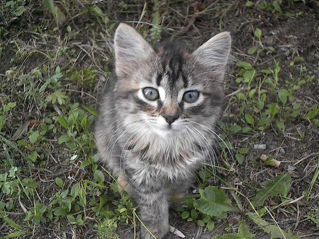 http://pollyhanson2.narod.ru/Kitten.jpg